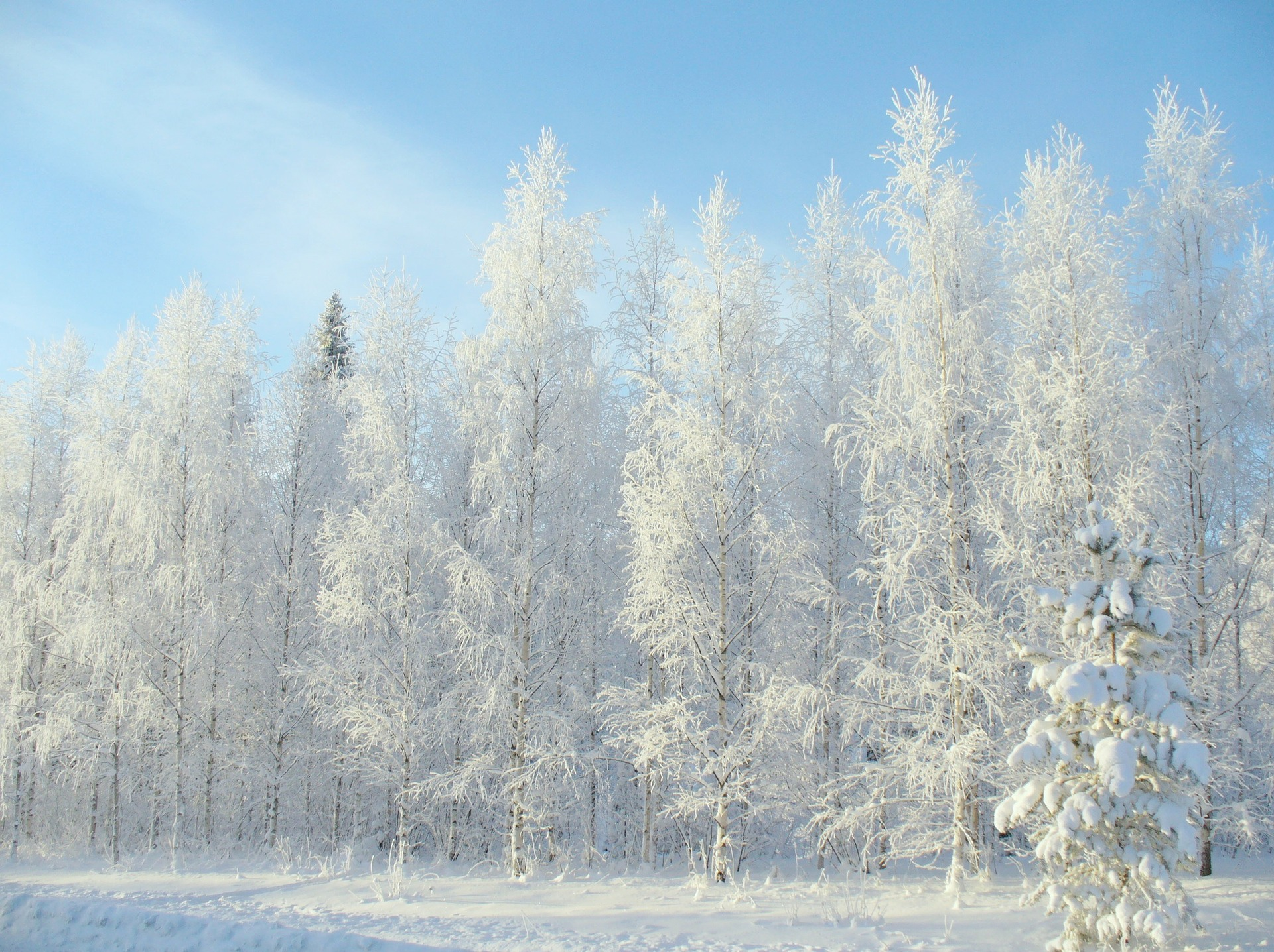 Kuvituskuva Talvi