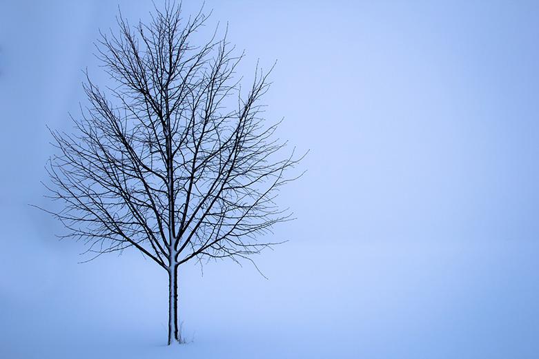 Kuvituskuva lehdetön puu talvella